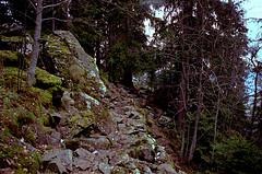 belledonneforest200911