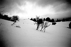 chartreuse_mar_2009_bw