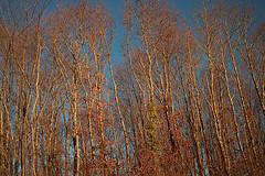 promenade_campagne_hiver